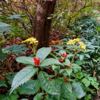 薬師の泉庭園の秋の花々