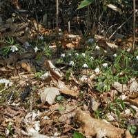 萩の里自然公園 開花情報