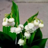 「名もない花」・環境・平和