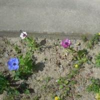 我が家の お花様達  643