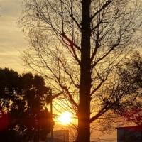 天竺川の自然・25回目・12月後半・2016.12.16~12.30