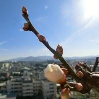 春の あし音