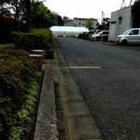 朝は、北側通路の落ち葉拾いしました