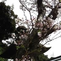 春風に愛をのせて(高山千代美)