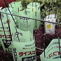 ミニミニ菜園の猫対策