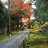 鹿王院(ろくおういん)の紅葉