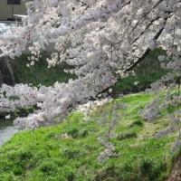 桜のイースター