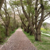 昨日と今日の「ミー散歩」  新川堤防と新川西緑地