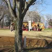 再びの「古河公方公園」桃まつり