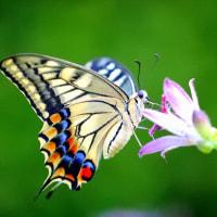 花とアゲハ蝶