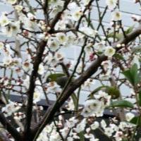 2月20日(月)の日本語学習