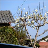 3月24日(金) 晴れ・・・でも寒い