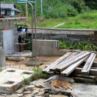 瀬戸内C島の猫たち 2016年 7月 その17