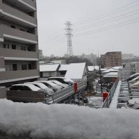 東京に何年ぶりかの積雪
