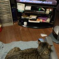 テレビっ子フローラシリーズ 10/29