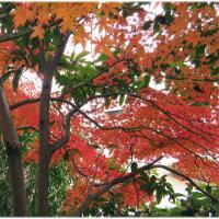 秋と冬な狭間の風景