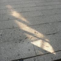 太陽が当たる場所