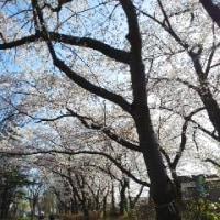 「朝の平和公園」