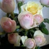 薔薇は薔薇は気高く咲ぃてぃ~てぇー