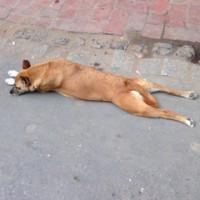 犬も暑いらしい・・・。