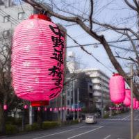 2017.03.20 中野通り : 早、「桜祭り準備完了」のピンク提灯
