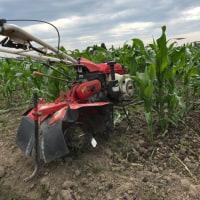 トウモロコシの培土