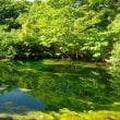 2017年7月26日 北八甲田 田代平湿原のようす
