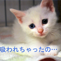ちび猫保育園2011-サッカー