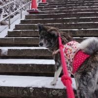 雪化粧の六甲山~