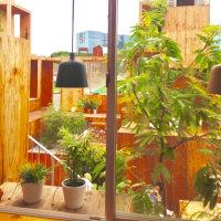 植物のある風景