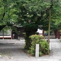 29日の散歩 ( 西陣聖天、妙蓮寺、本法寺から十二坊への散歩で、半夏生と芙蓉など )
