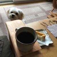 朝のコーヒータイム。