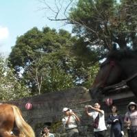 日南市でお祭り体験っ(^-^)