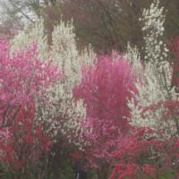 天神山・花の森ガーデン