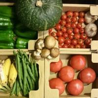 沖縄産直「野菜屋 元」さんの野菜が入荷しました♪