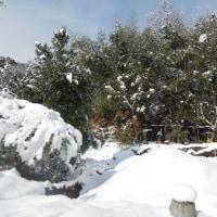 枝に積もった雪の重さで雪折れも発生/ネズミとモグラの捕獲作戦