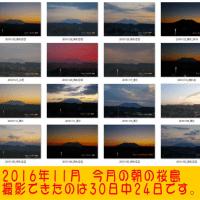 2016年11月30日、朝の桜島