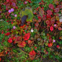 鎌倉日記22・・・円覚寺の小さな花