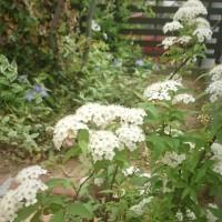 我が家の庭のニューフェース
