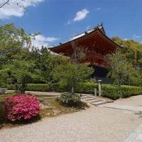 28日の散歩 ( 仁和寺往復で初夏便り? )