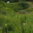 暑い中、種松山野草園へ