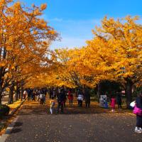 年末に向かって記念公園はイルミネーション(+長男の単独介護日記)の巻