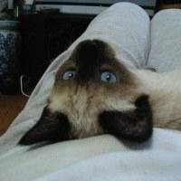 ネコへの視線