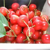 旬の果物♪