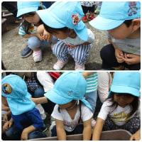 ☆すみれ組(2歳児)苗植えの体験をしたよ☆