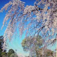 三つの春。梅、桃、桜