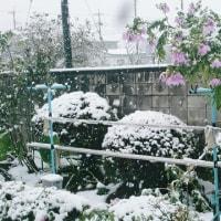 この時期に雪とは~♪