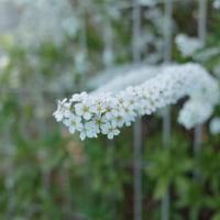 身近で目にした花たち