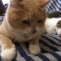 【猫日記こむぎ&だいず】2017.04.027