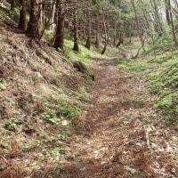 今月の25日に佐渡の裏銀座と呼ばれる石花登山口から平城畑の少し先まで